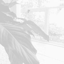 pb-item_plant-window